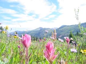 flower mtn1 shrine 9.3